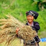 7 Days Northern Vietnam Tour