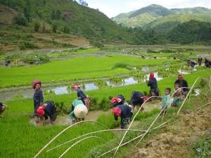 Hau Thao – Village