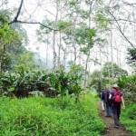 Trekking Cuc Phuong National Park
