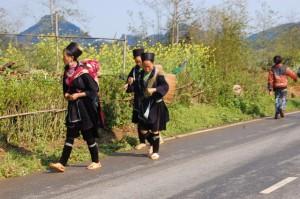 Y linh ho - Lao Chai - Ta Van